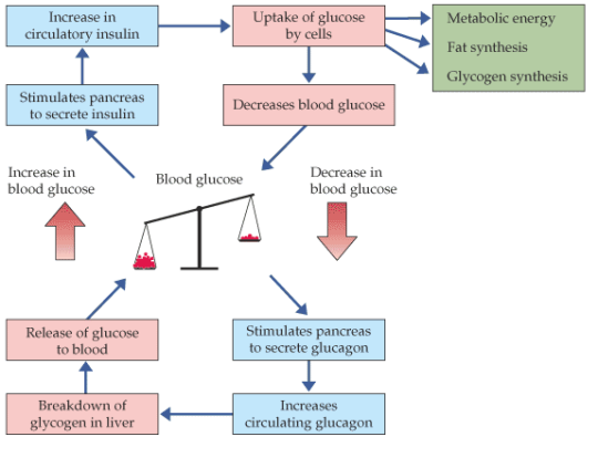 diagram of the lungs simple diagram of the lungs labeled glucose regulation nygma science